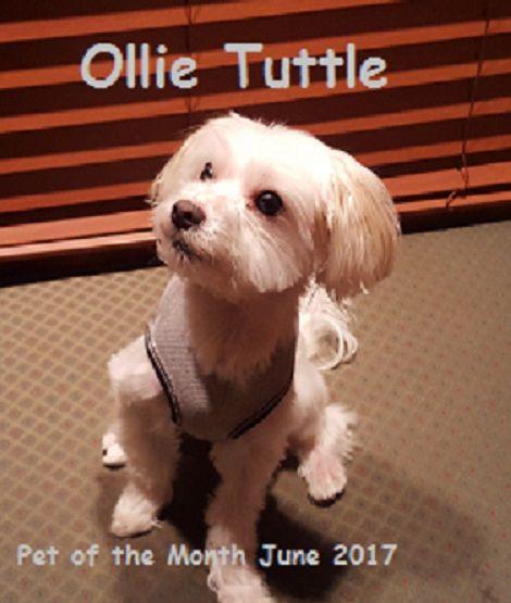 Ollie Tuttle
