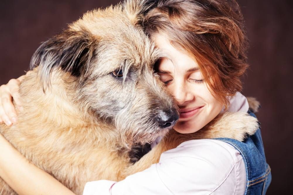 What to Know About Boarding a Senior Pet