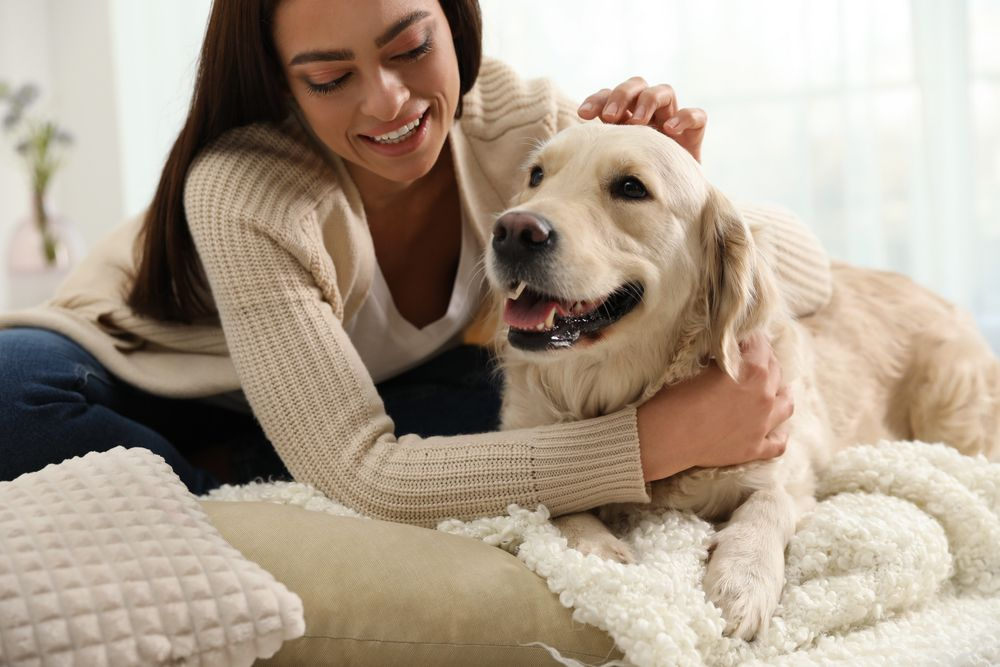 Packing and Preparing Your Dog for Boarding