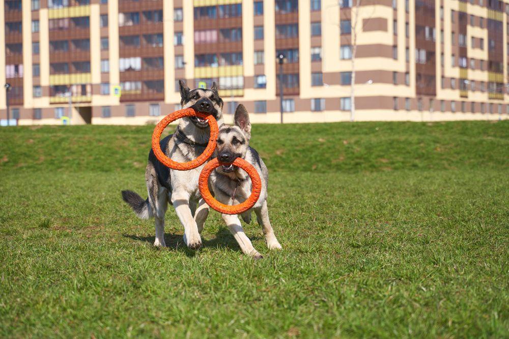 Benefits of Professional Pet Boarding