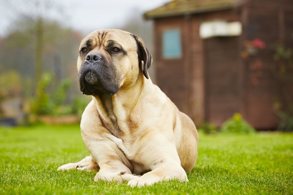 Frequently Asked Questions About Pet Boarding