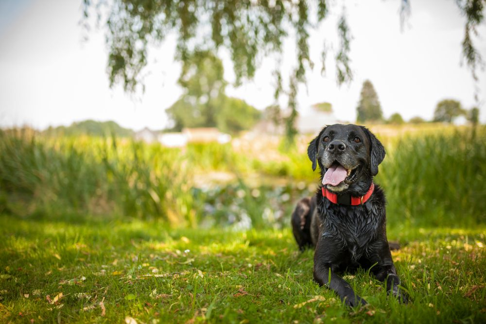 How to Keep Your Senior Pet Healthy