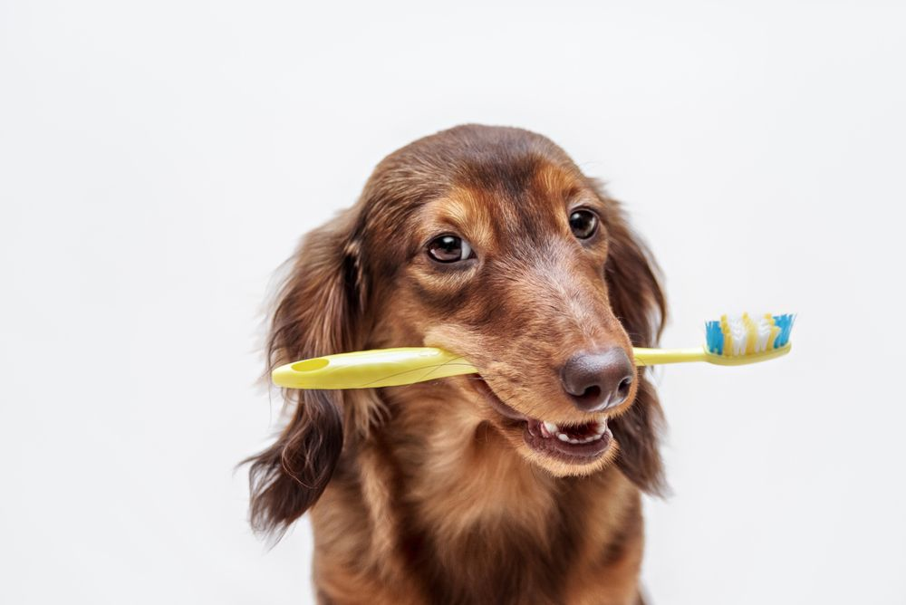 The Importance Of Pet Dental Cleanings