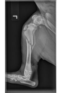 Pre Op Lateral Radiograph