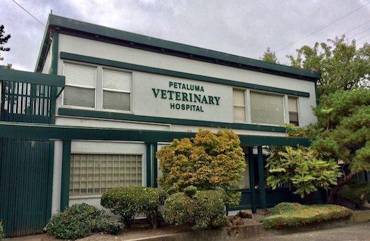 Animal Hospital- signage