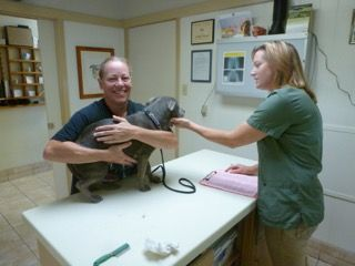 Animal examination and preventive care at Petaluma Veterinary Hospital in Petaluma CA