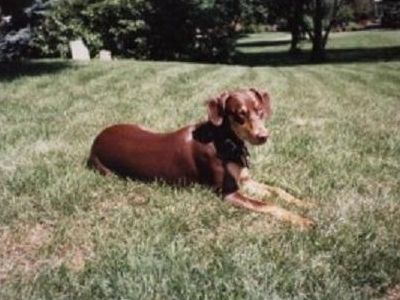 Memorial - Mocha Smith 1989-2004. World's best college and vet school study buddy.