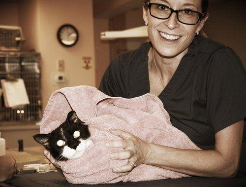cat with veterinarian