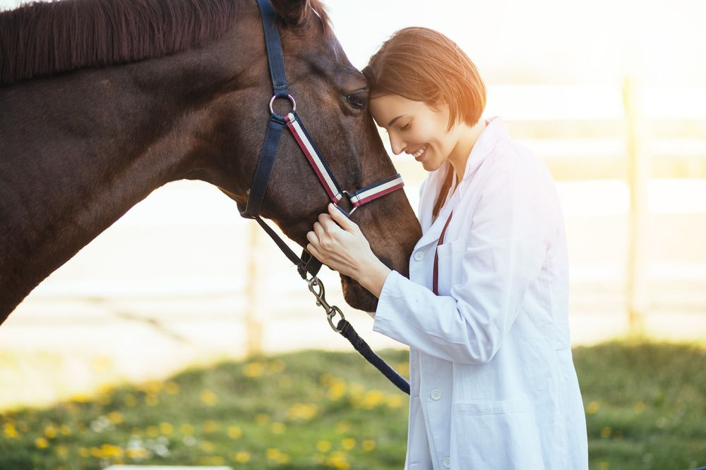 veterinarian holding a horse