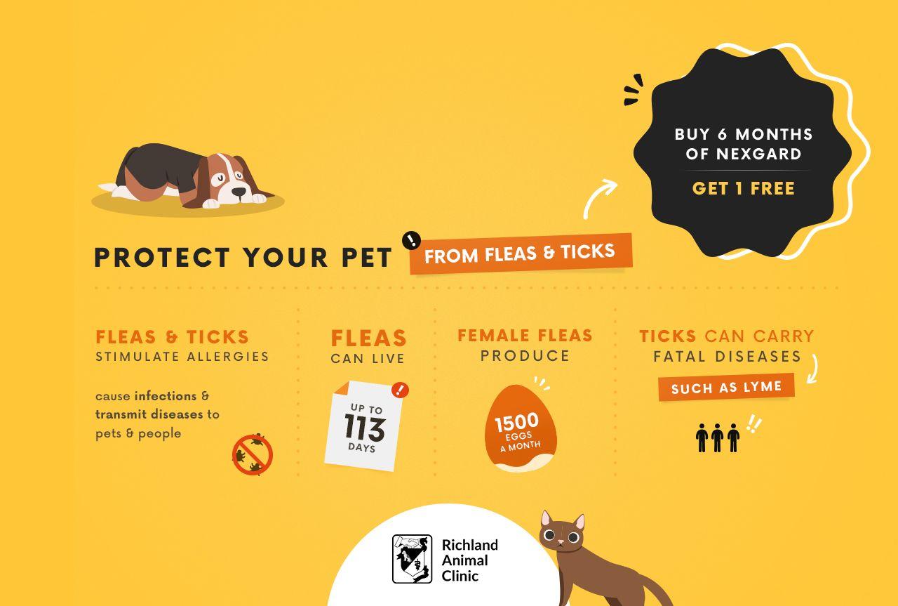 Pop-Up Richland Animal Clinic Promos