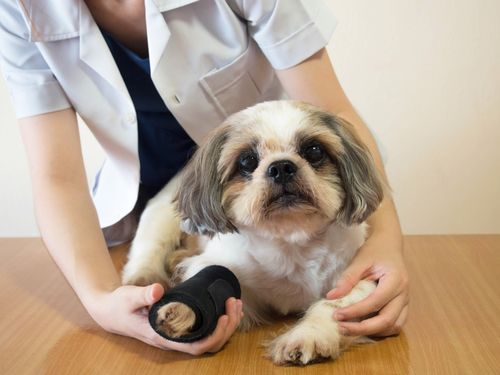 Pet Chiropractic Treatment