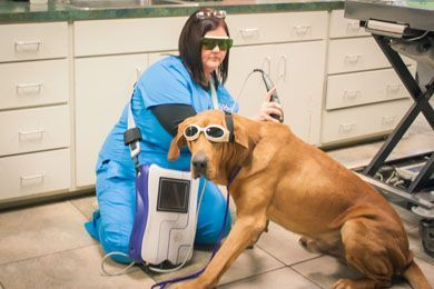 Vet staff with dog wearing protective eye wear