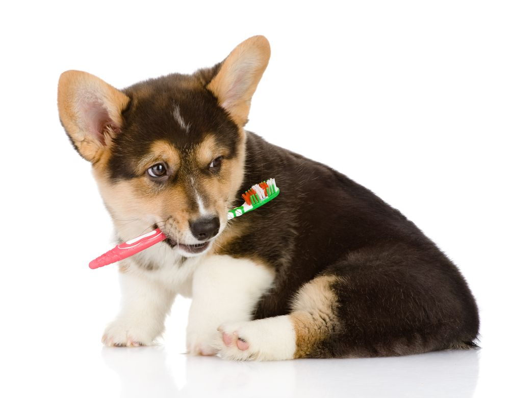 Why Is Pet Dental Care Important?