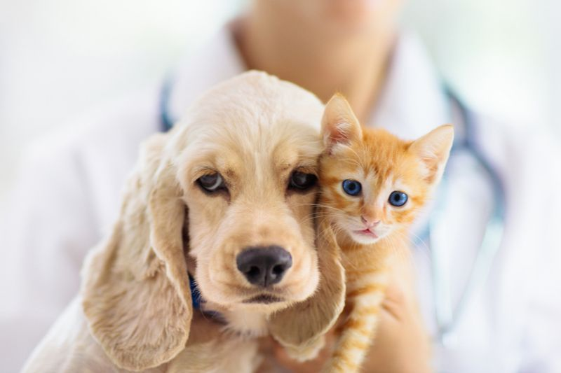 What is the spaying and neutering schedule for pets?