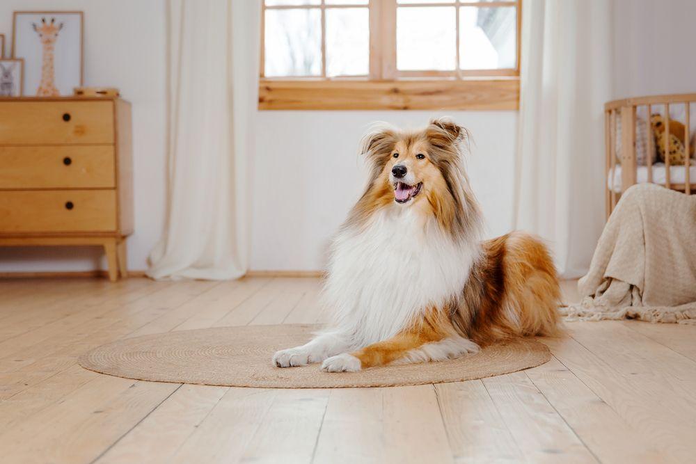 Benefits of Pet Boarding vs. Pet Sitters