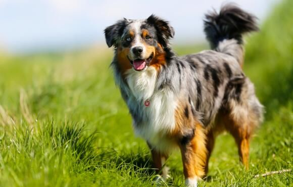 How to Prevent and Treat Lyme Disease in Dogs