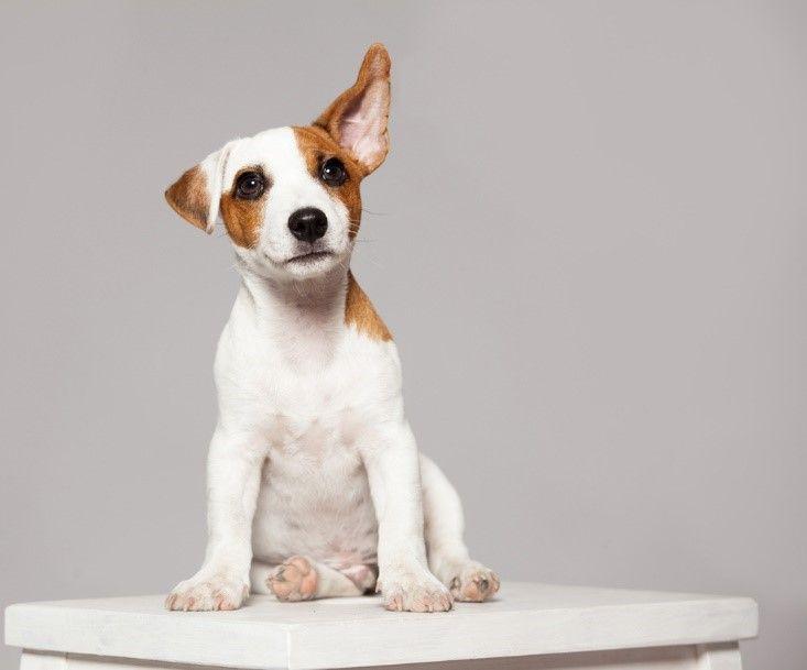 dog standing still