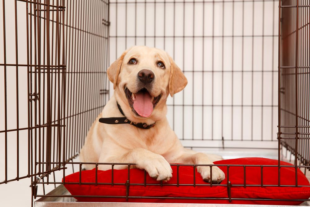 dog smiling in crate