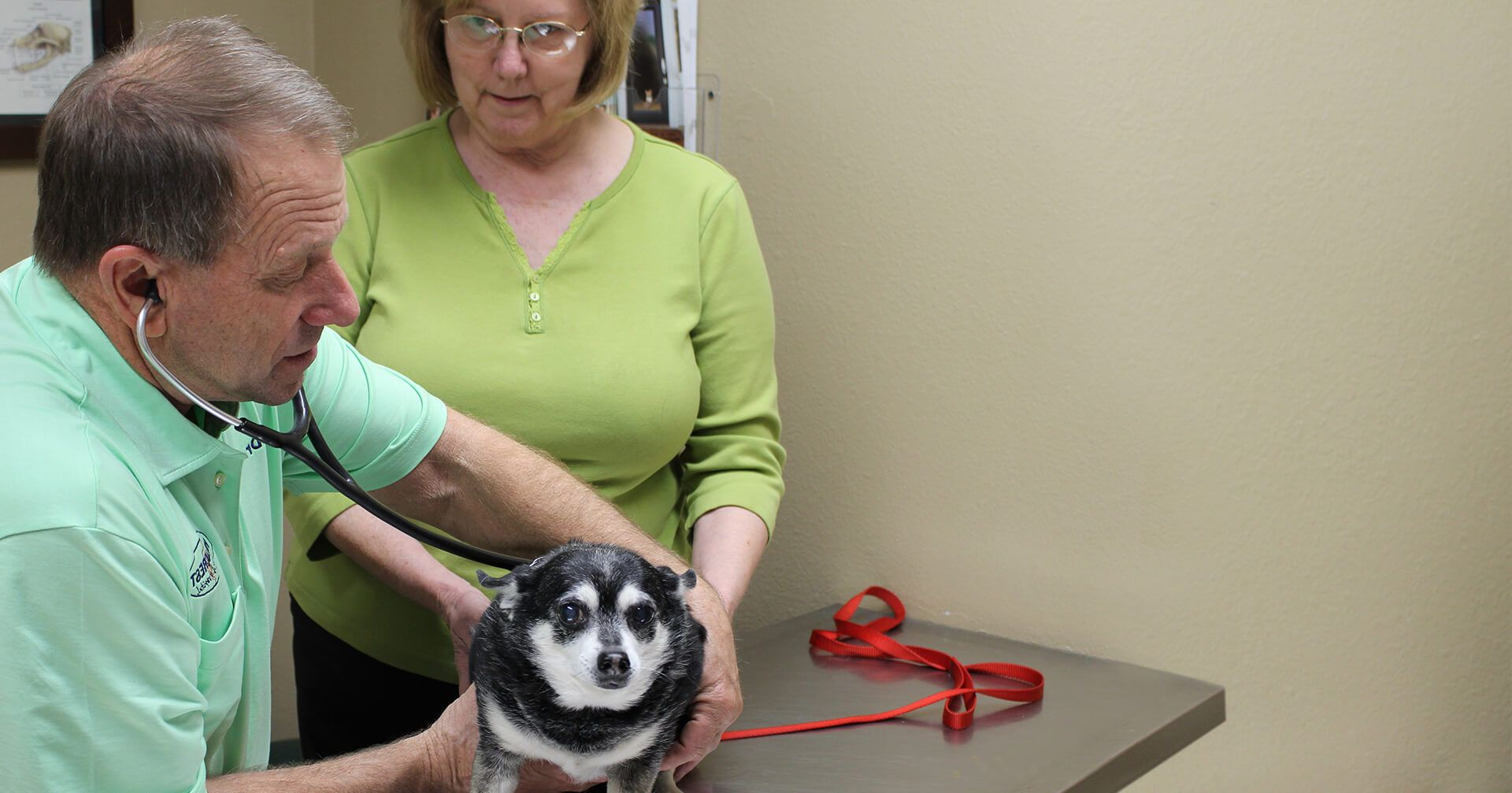 dog checked by a vet