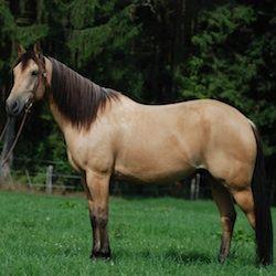 Bar S Animal Clinic - Horse