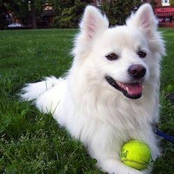 Bar S Animal Clinic - Dog