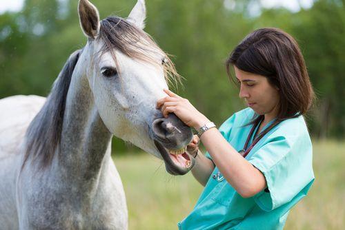 Northeast Louisiana Veterinary Services