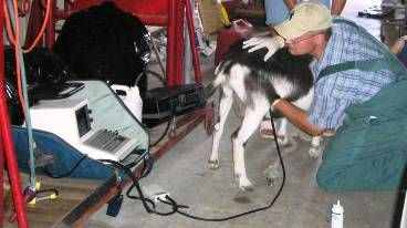 ultrasound for pets