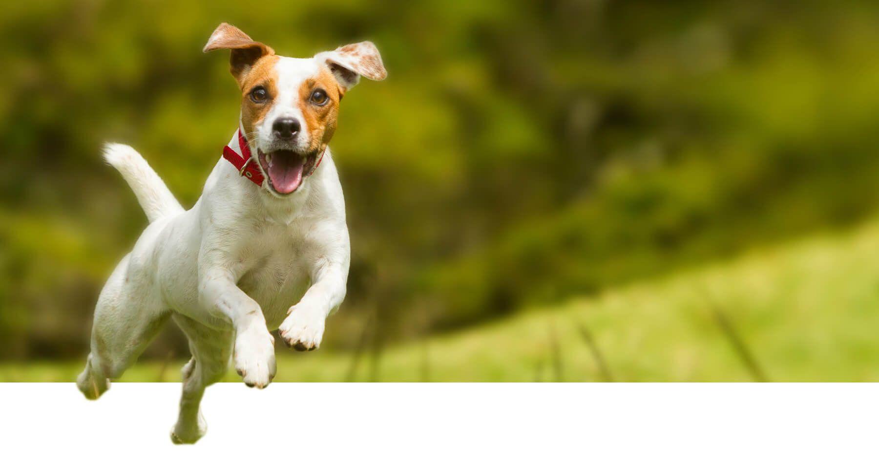 Jones Veterinary Hospital Veterinarian Pet Boarding Grooming In