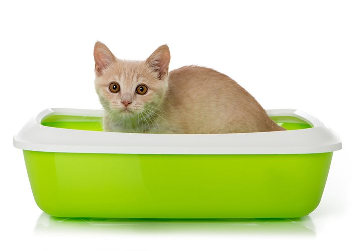Cat in A Bowl