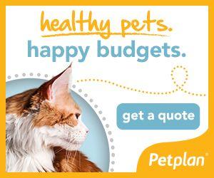 Pet Insurance Companies >> Pet Insurance