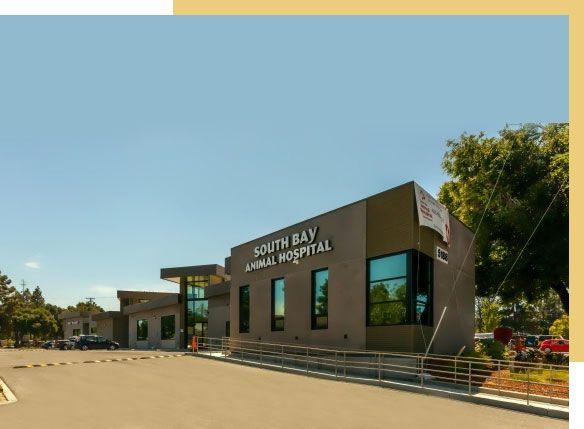 South Bay Animal Hospital and Pet Resort San Jose CA