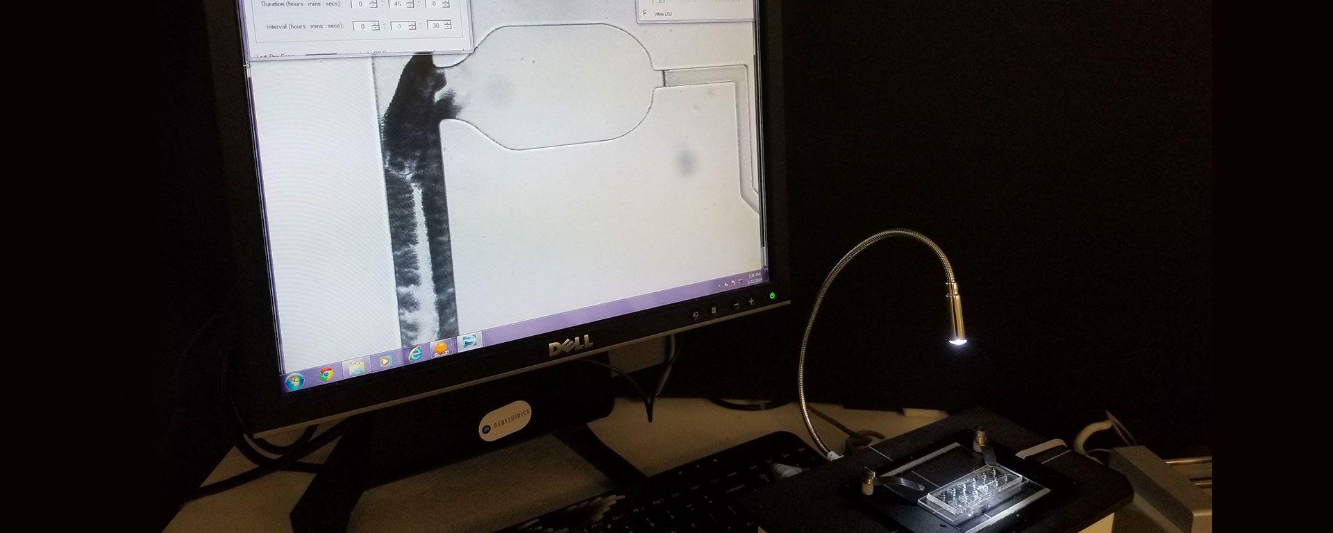 zebra fish microfluidics