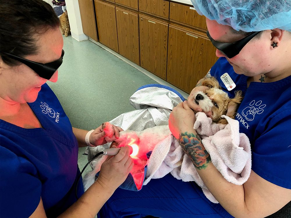 dog receiving laser therapy
