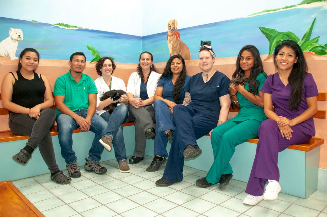 veterinarians at Petvacx Animal Hospital