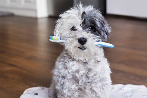 dog biting a toothbrush