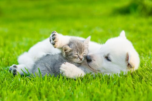 puppy and kitten