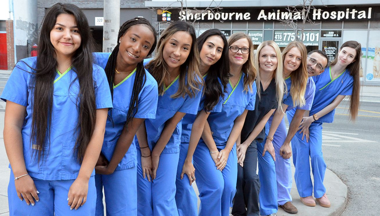 Sherbourne Animal Hospital team