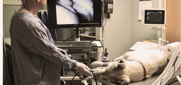 vet undergoing pet endoscopy