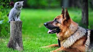 Community Pet Outreach
