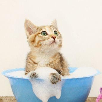 Bathing cat