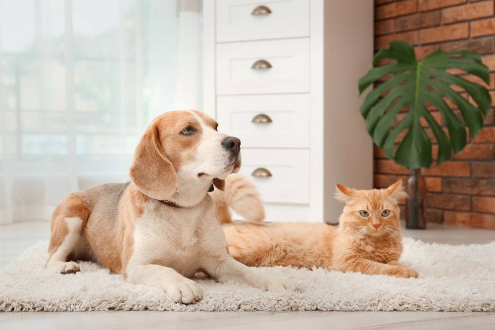 Is Your Pet in Pain? Top Signs to Watch Out For!