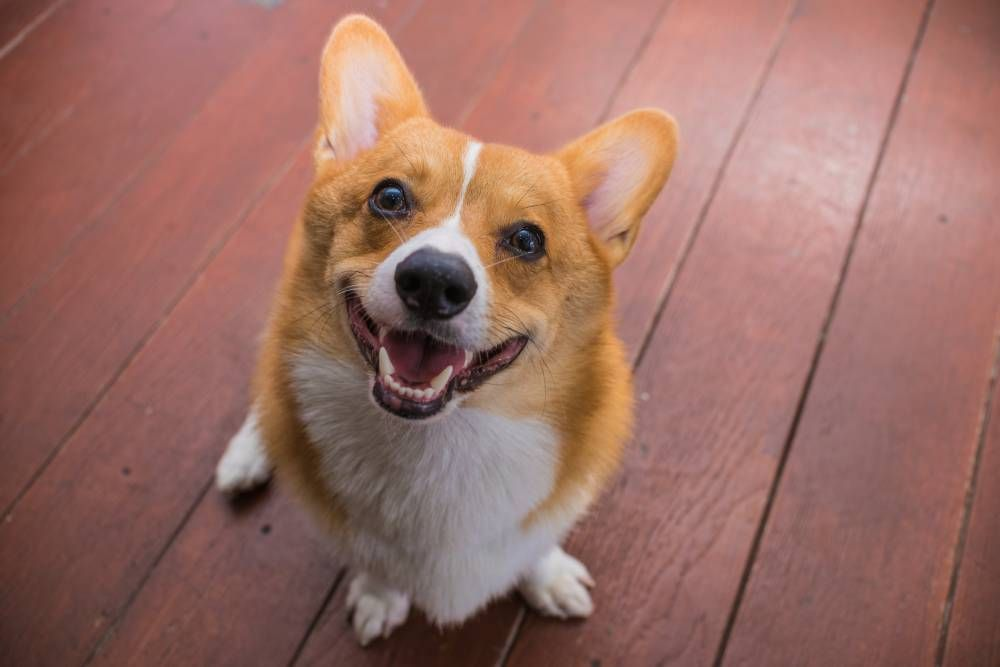Why Dental Care Is Important for Overall Pet Health
