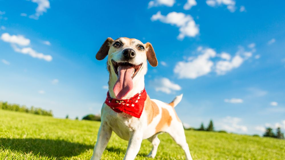 Hot Weather Tips for Your Pet This Summer