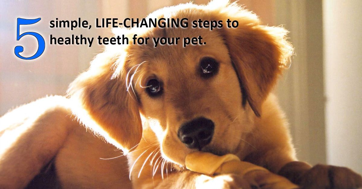 5 Simple, Life-changing Steps to Healthy Teeth for Your Pet