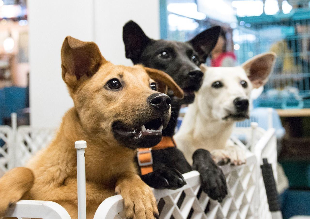 Pre-Pet Acquisition Counseling