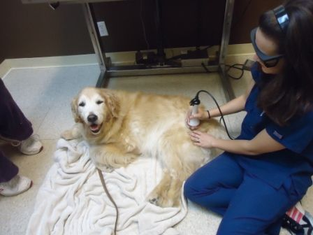 happy pet in a veterinary clinic