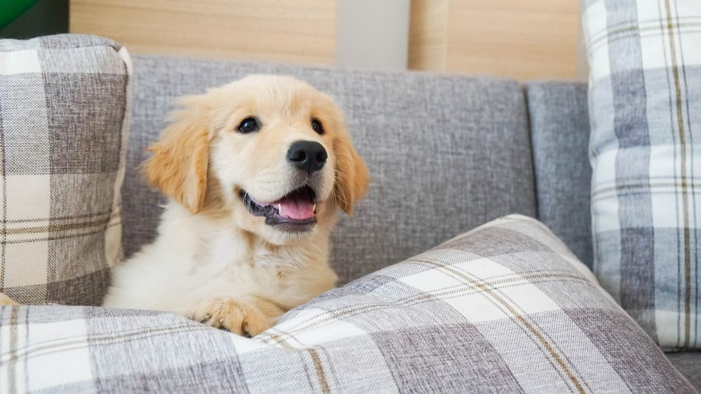 Cute Memphis Dog in couch