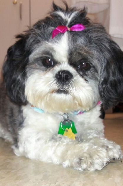 dog with ribbon