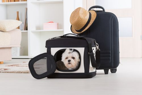 pet in travel carrier