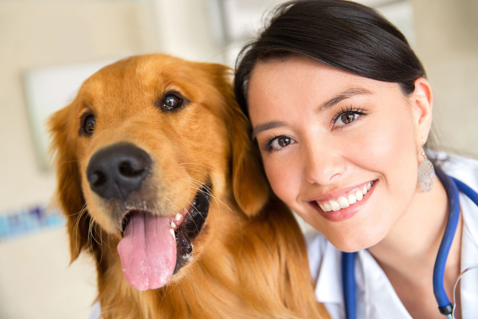 happy dog and veterinarian